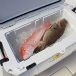 Pelican Marine Fish Cooler On Sale