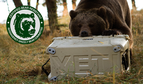 Bear Vs Yeti Cooler